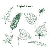 Reeks tropische bladeren Royalty-vrije Stock Foto's
