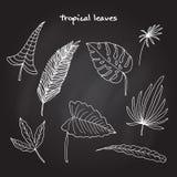 Reeks tropische bladeren Royalty-vrije Stock Afbeeldingen