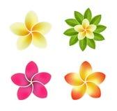 Reeks tropische bloemen Stock Afbeelding