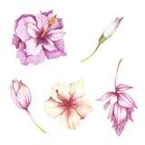 Reeks tropische bloemen De hand trekt waterverfillustratie Royalty-vrije Stock Fotografie