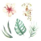 Reeks tropische bloemen en bladeren De illustratie van de waterverf Stock Foto's