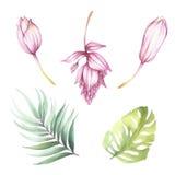 Reeks tropische bloemen en bladeren De illustratie van de waterverf Stock Fotografie
