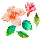 Reeks tropische bloemen hibiscus Bladeren Waterverfvector Royalty-vrije Stock Afbeelding