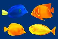 Reeks tropische vissen Royalty-vrije Stock Afbeeldingen