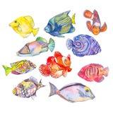 Reeks tropische vissen Stock Afbeeldingen