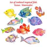 Reeks tropische vissen Vector Royalty-vrije Stock Afbeelding