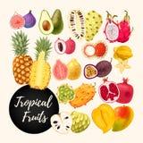 Reeks tropische vruchten Stock Foto's