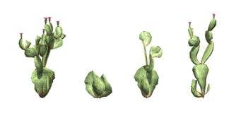 Reeks van Beavertail-Cactus royalty-vrije illustratie