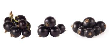 Reeks van blackcurrant op wit wordt geïsoleerd dat Rijpe en smakelijke zwarte bes met exemplaarruimte voor tekst stock foto