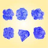 Reeks van blauwe rozenvector Stock Afbeeldingen