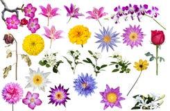 Reeks van bloem Stock Afbeelding