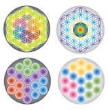 Reeks van Bloem van Multicolored het Levenspictogrammen/Symbolen en Regenboogkleuren Stock Afbeeldingen