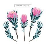 Reeks van bloemen uitstekende hand getrokken protea, wildflowers Stock Foto's