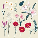 Reeks van Bloemengroetkaart met Bloeiende tuinbloemen Royalty-vrije Stock Foto's
