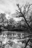 Reeks van boom op het meer royalty-vrije stock afbeeldingen