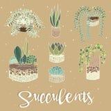Reeks van cactus houseplants in bloempotten Vector pictogrammen royalty-vrije stock afbeeldingen