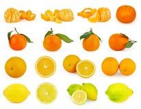 Reeks van citrusvruchten die op wit wordt geïsoleerd royalty-vrije stock afbeelding