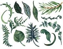 Reeks van de de bladereninzameling van de waterverfillustratie de Botanische van wildernis royalty-vrije illustratie