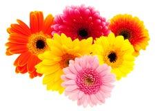 Reeks van de bloem van Gerbera Daisy Stock Foto's