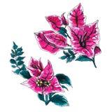 Reeks van de bougainvillea de decoratieve bloem Stock Fotografie