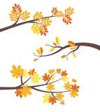 Reeks van de de brunches de vlakke vectorgrens van de de herfstboom Stock Afbeelding