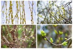 Reeks van de eerste lente Royalty-vrije Stock Fotografie