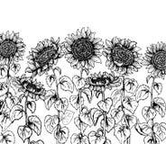 Reeks van de hand getrokken Grafische lijn van de zonnebloem uitstekende schets royalty-vrije illustratie