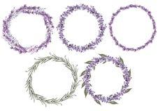 Reeks van 5 de lavendelbloemen van de waterverfkroon op witte achtergrond royalty-vrije illustratie