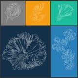 Reeks van de schets de grafische illustratie bloemen Royalty-vrije Stock Afbeeldingen