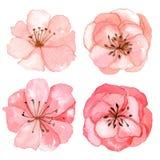 Reeks van de tekening van de bloemenwaterverf Stock Fotografie