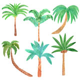 Reeks van de waterverf de hand getrokken palm Stock Foto