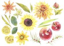 Reeks van de waterverf de hand geschilderde illustratie dalingsbloemen en installaties royalty-vrije illustratie