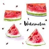 Reeks van de waterverf de rode sappige watermeloen stock illustratie