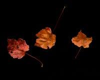 Reeks van Drie Dalingsbladeren Royalty-vrije Stock Foto
