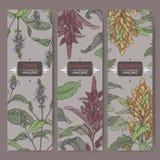 Reeks van drie etiketten met amarant, quinoa en chiakleurenschets De inzameling van graangewasseninstallaties Stock Afbeeldingen