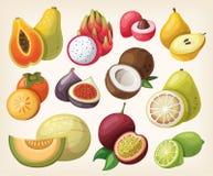 Reeks van exotisch fruit Stock Afbeeldingen
