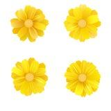 Reeks van geïsoleerd geel gerbera of madeliefje Vector kleurrijke bloemen op witte achtergrond Malplaatje voor voor t-shirt, mani stock illustratie