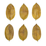 Reeks van geïsoleerd op witte droge gele bladeren Royalty-vrije Stock Foto