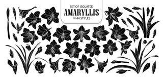 Reeks van geïsoleerd silhouet Amaryllis of Hippeastrum in 44 stijlen Leuke hand getrokken bloem vectorillustratie in wit overzich stock illustratie