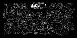 Reeks van geïsoleerde magnolia in 21 stijlen Het leuke hand getrokken witte slechts overzicht van de bloem vectorillustratie royalty-vrije illustratie