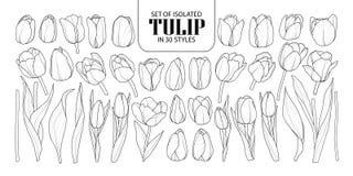 Reeks van geïsoleerde Tulp in 30 stijlen Leuke hand getrokken bloemvecto royalty-vrije illustratie