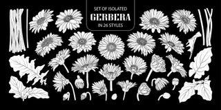 Reeks van geïsoleerde witte silhouetgerbera in 26 stijlen vector illustratie