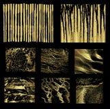 Reeks van gouden vector als achtergrond Stock Foto's
