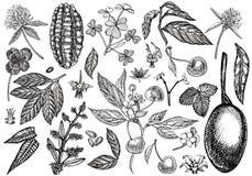 Reeks van grafische botanische illustratie Mangofruit, Cacao en Bessenaardbei, framboos, appel, ge?soleerde kers royalty-vrije illustratie