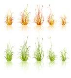 Reeks van gras vector illustratie