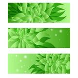Reeks van groen natuurlijk bloemenadreskaartjemalplaatje Vector Illustratie