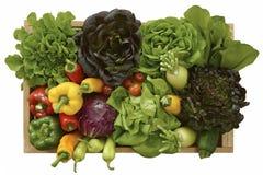 Reeks van groente Royalty-vrije Stock Afbeeldingen