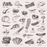 Reeks van hand getrokken groenten hoog gedetailleerd schets Royalty-vrije Stock Afbeelding
