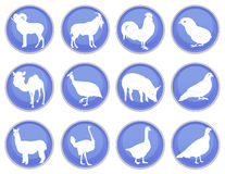 Reeks 2 van het huisdierenpictogram Royalty-vrije Stock Afbeeldingen