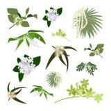 Reeks van het trekken van wilde bloemen royalty-vrije illustratie